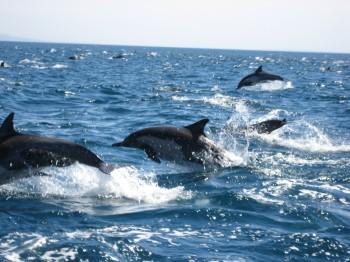 Joy in the Sea of Cortez