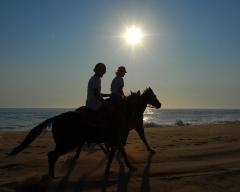 Sunset gallop on beach