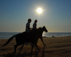 Sunset gallop on beach