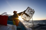 Fishermen baits and sets a trap for sand bass. Photo © Carlos Aguilar - SmartFish