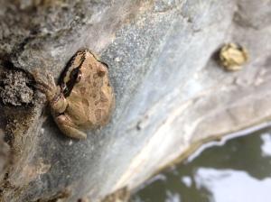 Tree frogs_Bogan_NICE.Mike Bogan